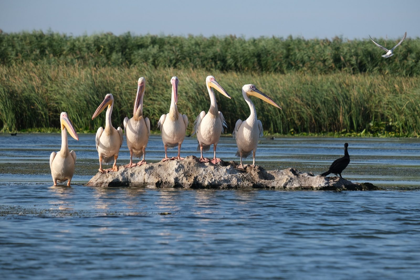Rumunija, Delta Dunava, foto safari